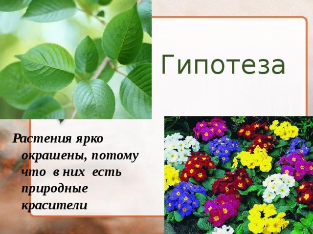 Гипотеза  Растения ярко окрашены, потому что в них есть природные красители