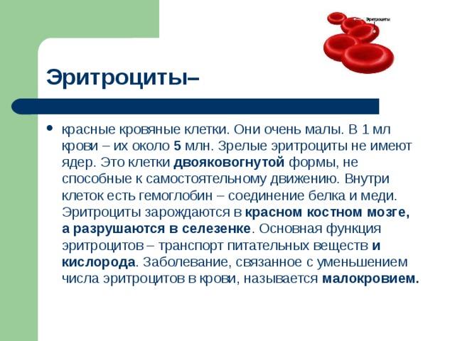 Эритроциты–