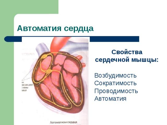 Автоматия сердца Свойства сердечной мышцы:  Возбудимость Сократимость Проводимость Автоматия