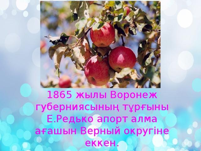 1865 жылы Воронеж губерниясының тұрғыны Е.Редько апорт алма ағашын Верный округіне еккен.