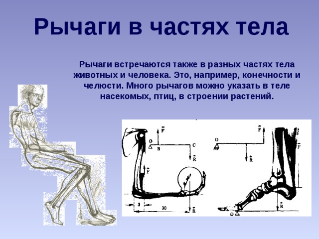 Рычаги в частях тела Рычаги встречаются также в разных частях тела животных и человека. Это, например, конечности и челюсти. Много рычагов можно указать в теле насекомых, птиц, в строении растений.