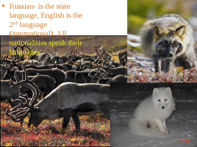Russian- is the state language, English is the 2 nd language (international). All nationalities speak their languages.