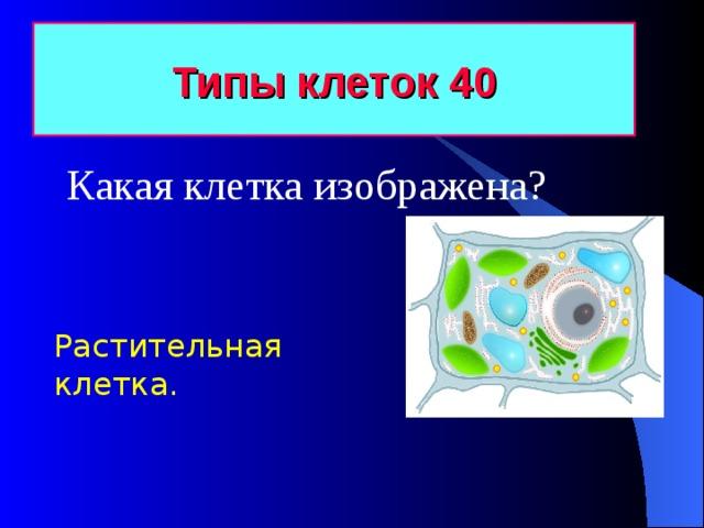Типы клеток 40 Какая клетка изображена? Растительная клетка.