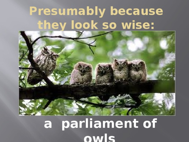 Presumably because they look so wise:  , a parliament of owls .