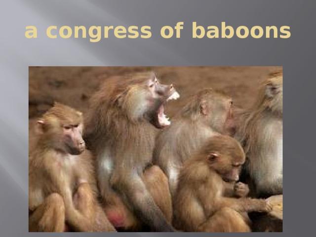 a congress of baboons