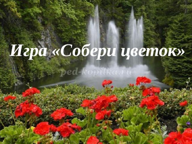 Игра «Собери цветок»