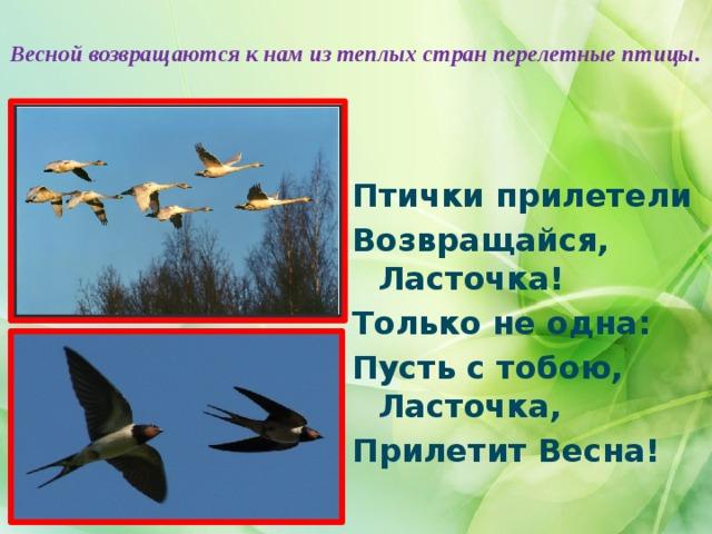 Весной возвращаются к нам из теплых стран перелетные птицы.   Птички прилетели Возвращайся, Ласточка! Только не одна: Пусть с тобою, Ласточка, Прилетит Весна!