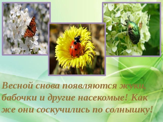Весной снова появляются жуки, бабочки и другие насекомые! Как же они соскучились по солнышку!