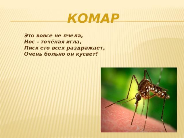Комар Это вовсе не пчела, Нос - точёная игла, Писк его всех раздражает, Очень больно он кусает!