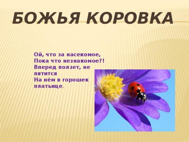 Божья коровка Ой, что за насекомое, Пока что незнакомое?! Вперед ползет, не пятится На нём в горошек платьице .