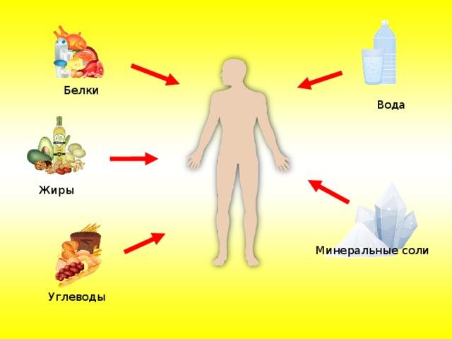 Белки Вода Жиры Минеральные соли Углеводы