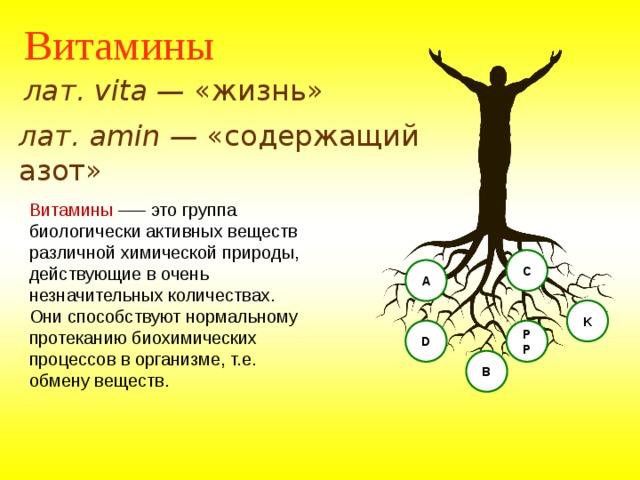 Витамины лат. vita — «жизнь» лат. amin — «содержащий азот» Витамины —– это группа биологически активных веществ различной химической природы, действующие в очень незначительных количествах. Они способствуют нормальному протеканию биохимических процессов в организме, т.е. обмену веществ. C А K PP D В