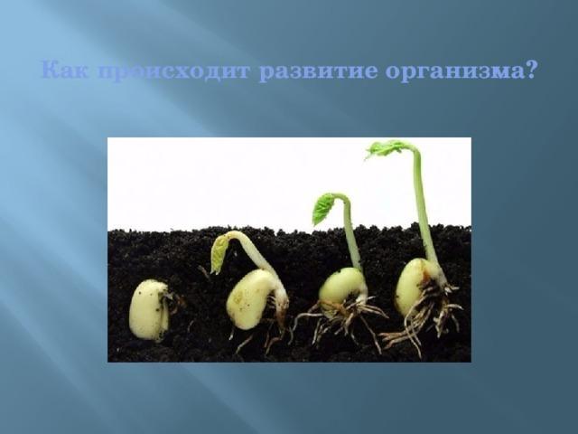 Как происходит развитие организма?