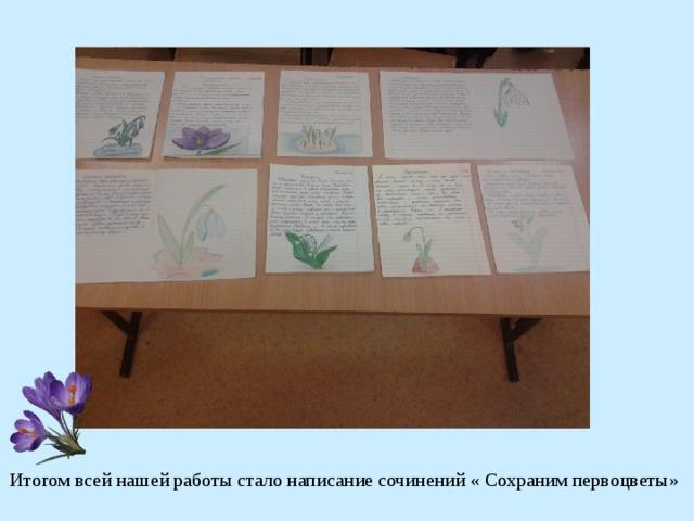 Итогом всей нашей работы стало написание сочинений « Сохраним первоцветы»