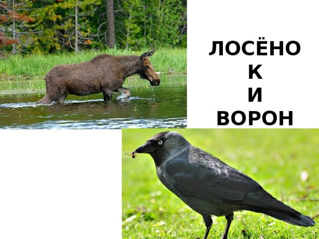 ЛОСЁНОК И ВОРОН