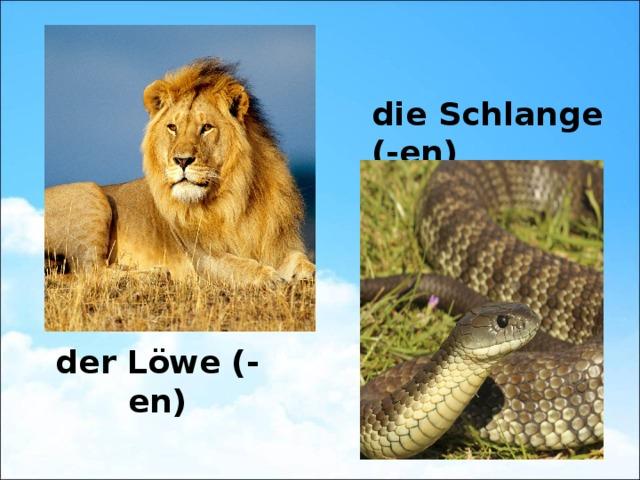 die Schlange (-en) der Löwe (-en)