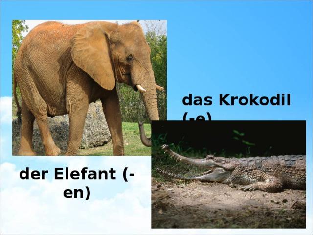 das Krokodil (-e) der Elefant (-en)