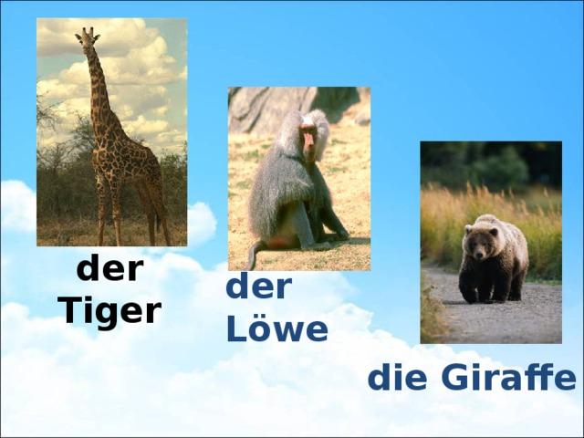 der Tiger der Löwe die Giraffe