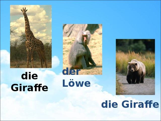 die Giraffe der Löwe die Giraffe