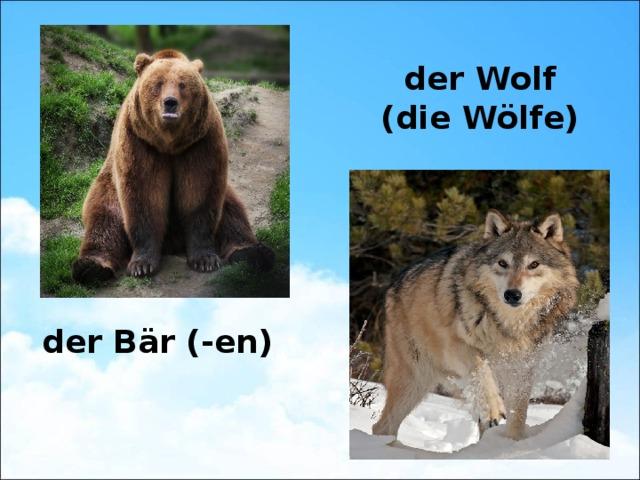 der Wolf (die Wölfe) der Bär (-en)