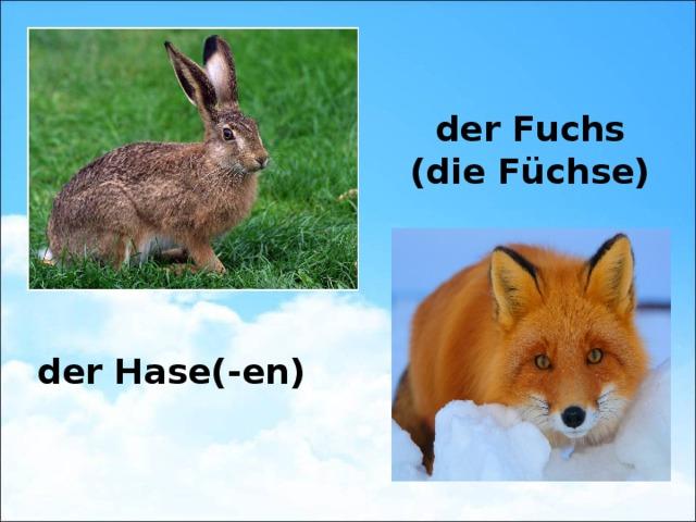 der Fuchs (die Füchse) der Hase(-en)