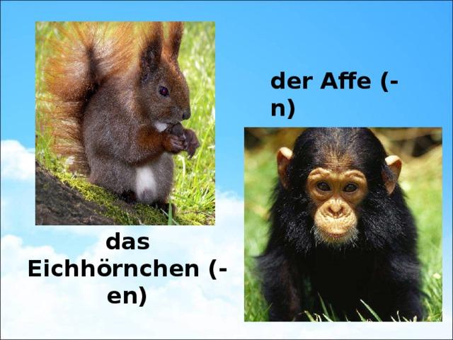 der Affe (-n) das Eichhörnchen (-en)