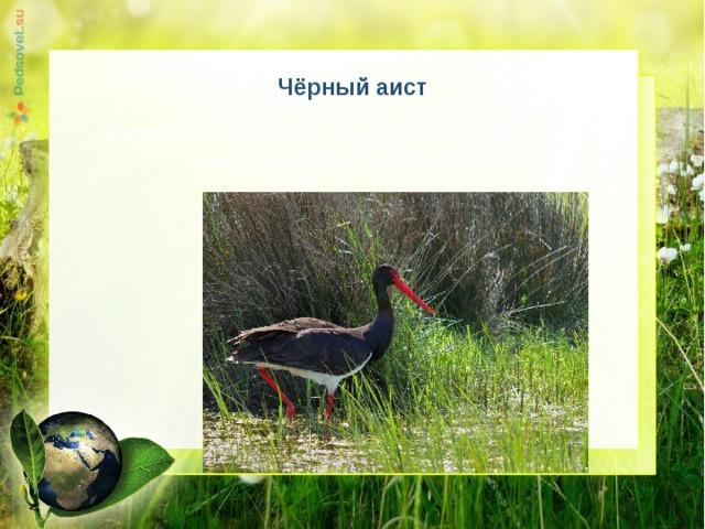 Чёрный аист  По численности вид находится в Удмуртии в критическом состоянии. Отмечен в пойме реки Лекма (Ярский район).