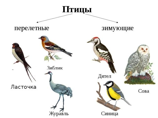 совы перелетные птицы или нет завораживает зрителей