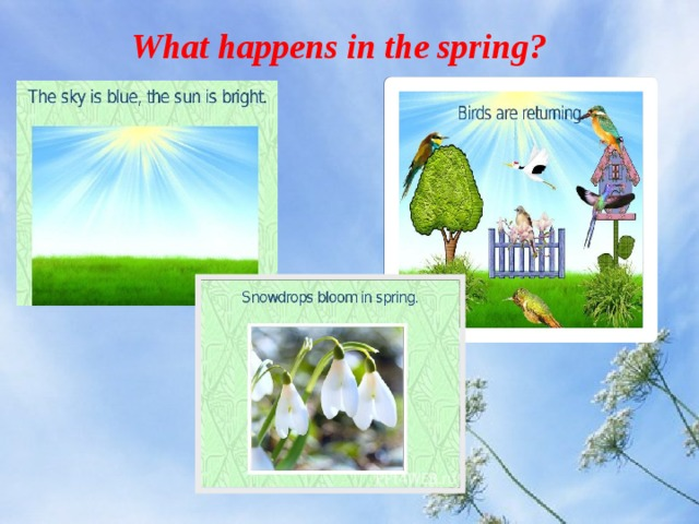What happens in the spring?
