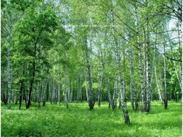 Подберите стихи к картинам природы