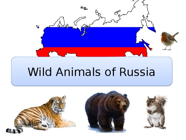 Wild Animals of Russia