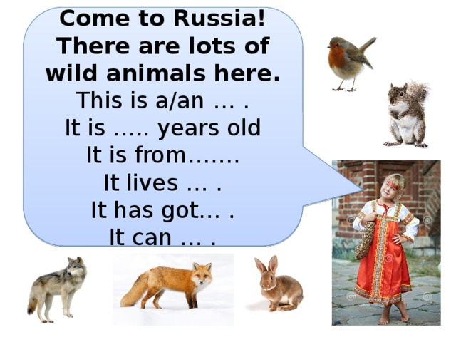 Come to Russia! There are lots of wild animals here. This is a/an … . It is ….. years old It is from……. It lives … . It has got… . It can … .