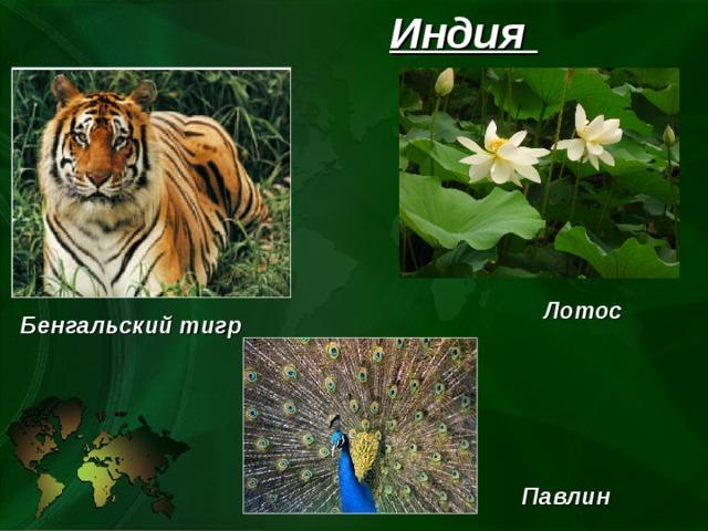 Индия Лотос Бенгальский тигр Павлин