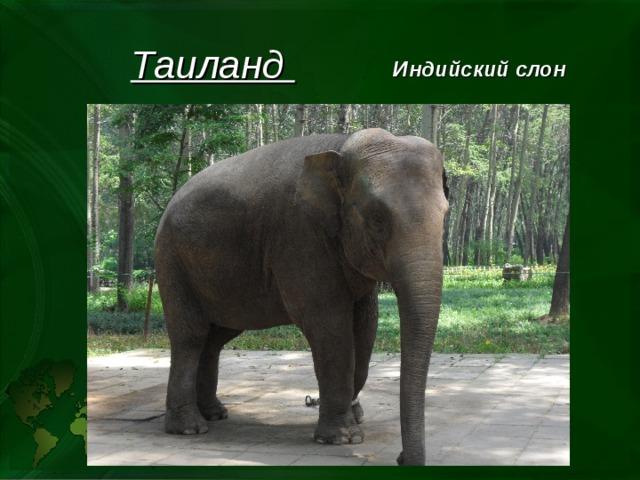 Таиланд Индийский слон