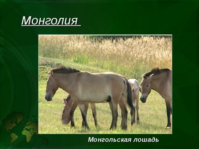 Монголия Монгольская лошадь