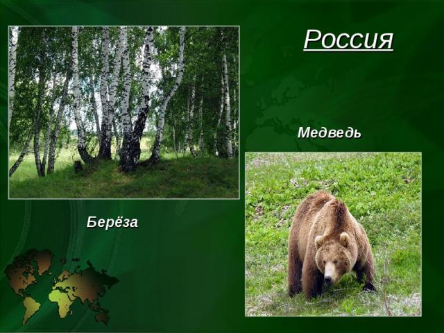 Россия Медведь Берёза
