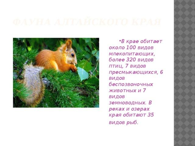Фауна Алтайского края