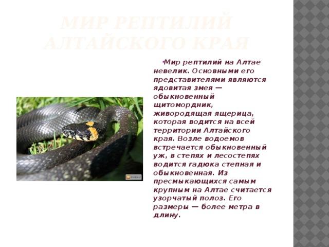Мир рептилий алтайского края