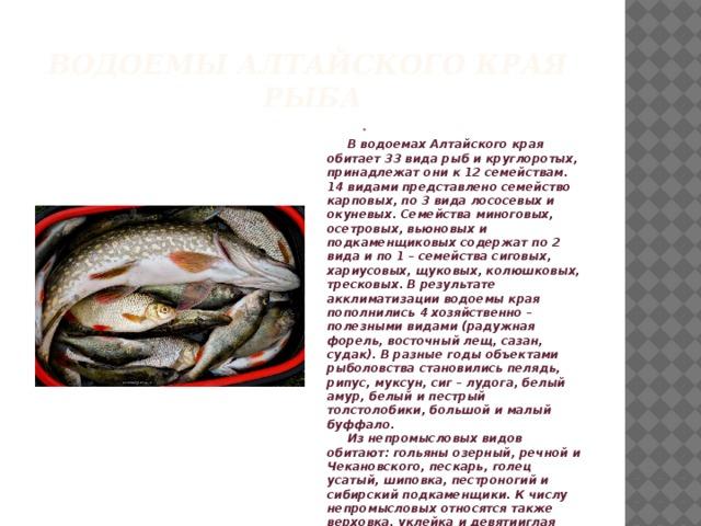 Водоемы алтайского края  рыба