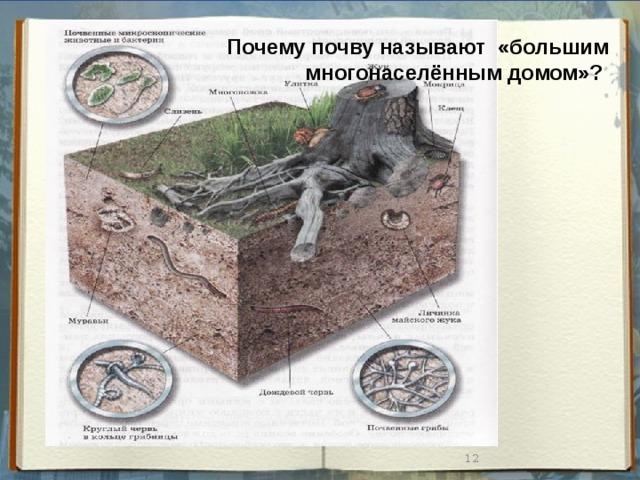 Почему почву называют «большим многонаселённым домом»?
