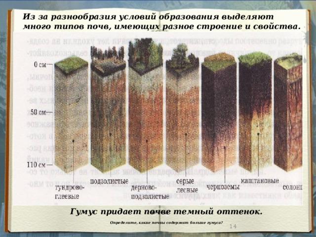 Из за разнообразия условий образования выделяют много типов почв, имеющих разное строение и свойства. Гумус придает почве темный оттенок.  Определите, какие почвы содержат больше гумуса?