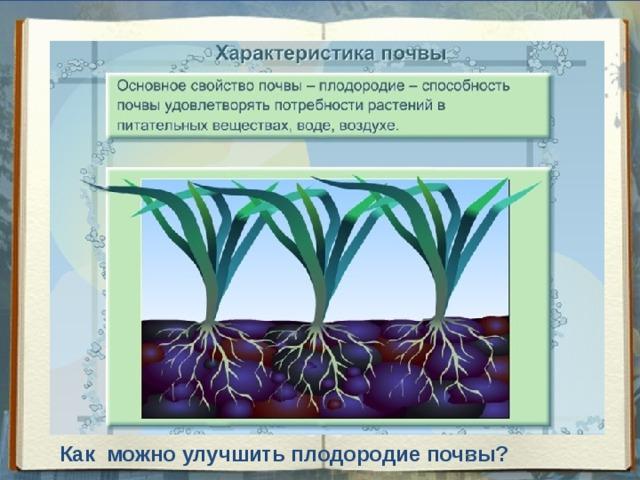 Как можно улучшить плодородие почвы?