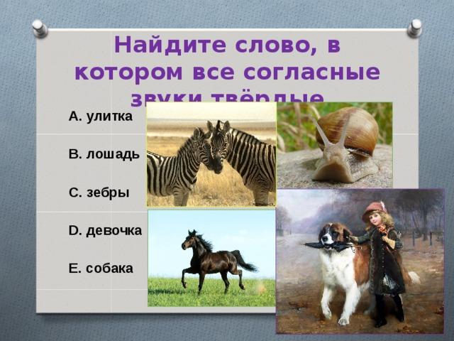 Найдите слово, в котором все согласные звуки твёрдые A. улитка  B. лошадь  C. зебры  D. девочка  E. собака