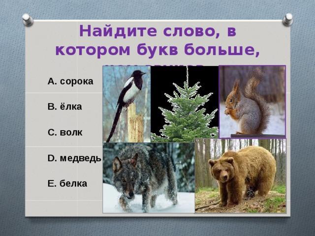 Найдите слово, в котором букв больше, чем звуков. A. сорока  B. ёлка  C. волк  D. медведь  E. белка