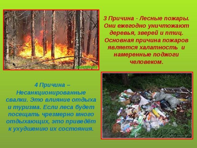 3 Причина - Лесные пожары. Они ежегодно уничтожают деревья, зверей и птиц. Основная причина пожаров является халатность и намеренные поджоги человеком.  4 Причина – Несанкционированные свалки. Это влияние отдыха и туризма. Если леса будет посещать чрезмерно много отдыхающих, это приведёт к ухудшению их состояния.