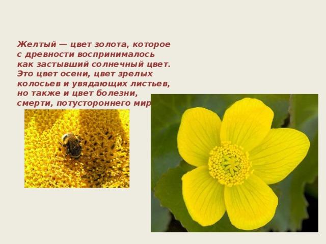 Желтый — цвет золота, которое с древности воспринималось как застывший солнечный цвет. Это цвет осени, цвет зрелых колосьев и увядающих листьев, но также и цвет болезни, смерти, потустороннего мира.
