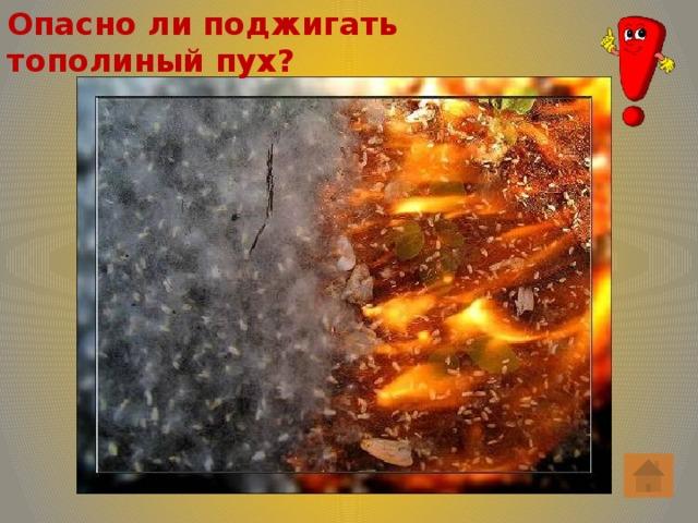 Опасно ли поджигать тополиный пух?