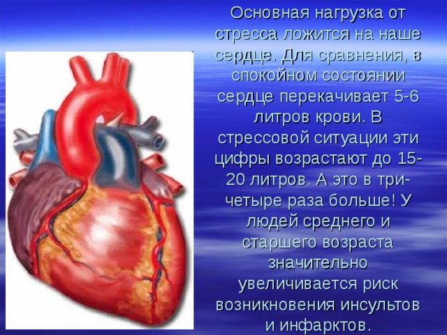 Основная нагрузка от стресса ложится на наше сердце. Для сравнения, в спокойном состоянии сердце перекачивает 5-6 литров крови. В стрессовой ситуации эти цифры возрастают до 15-20 литров. А это в три-четыре раза больше! У людей среднего и старшего возраста значительно увеличивается риск возникновения инсультов и инфарктов.