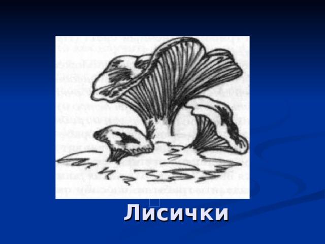 Лисички в)