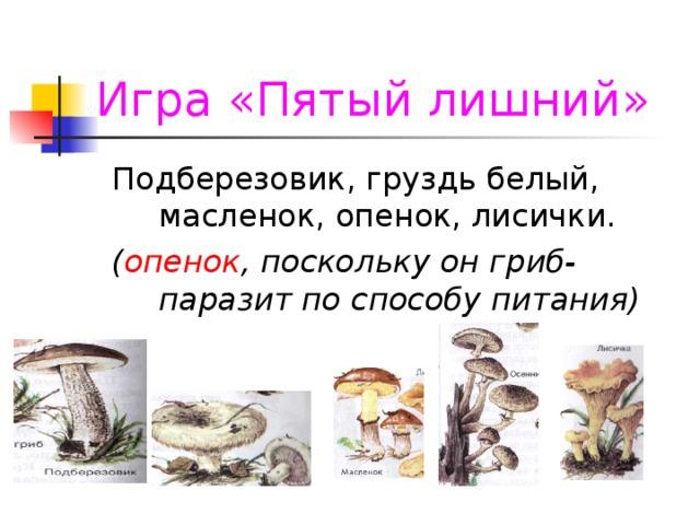 Игра «Пятый лишний» ( опенок , поскольку он гриб-паразит по способу питания)